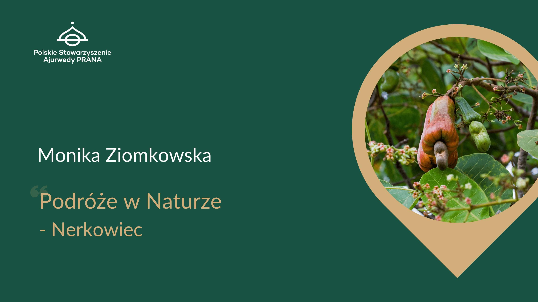 Podróże w Naturze – Nerkowiec, Monika Ziomkowska – Malec