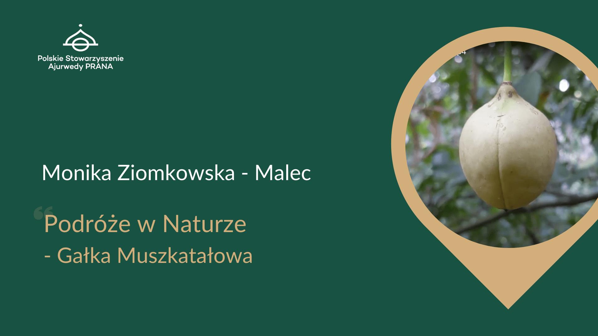 Podróże w Naturze – Gałka Muszkatałowa