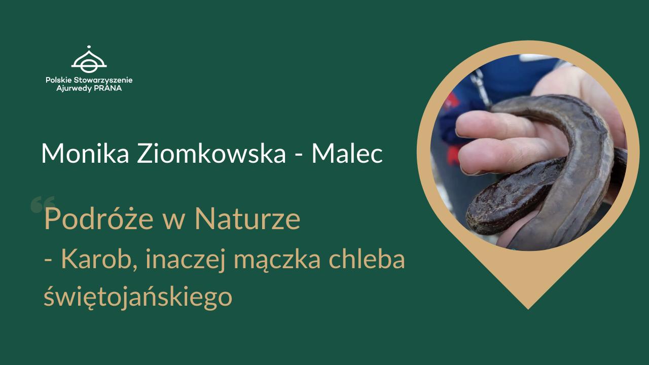 """Podróże w Naturze """"Karob, inaczej mączka chleba świętojańskiego"""" – Monika Ziomkowska – Malec"""