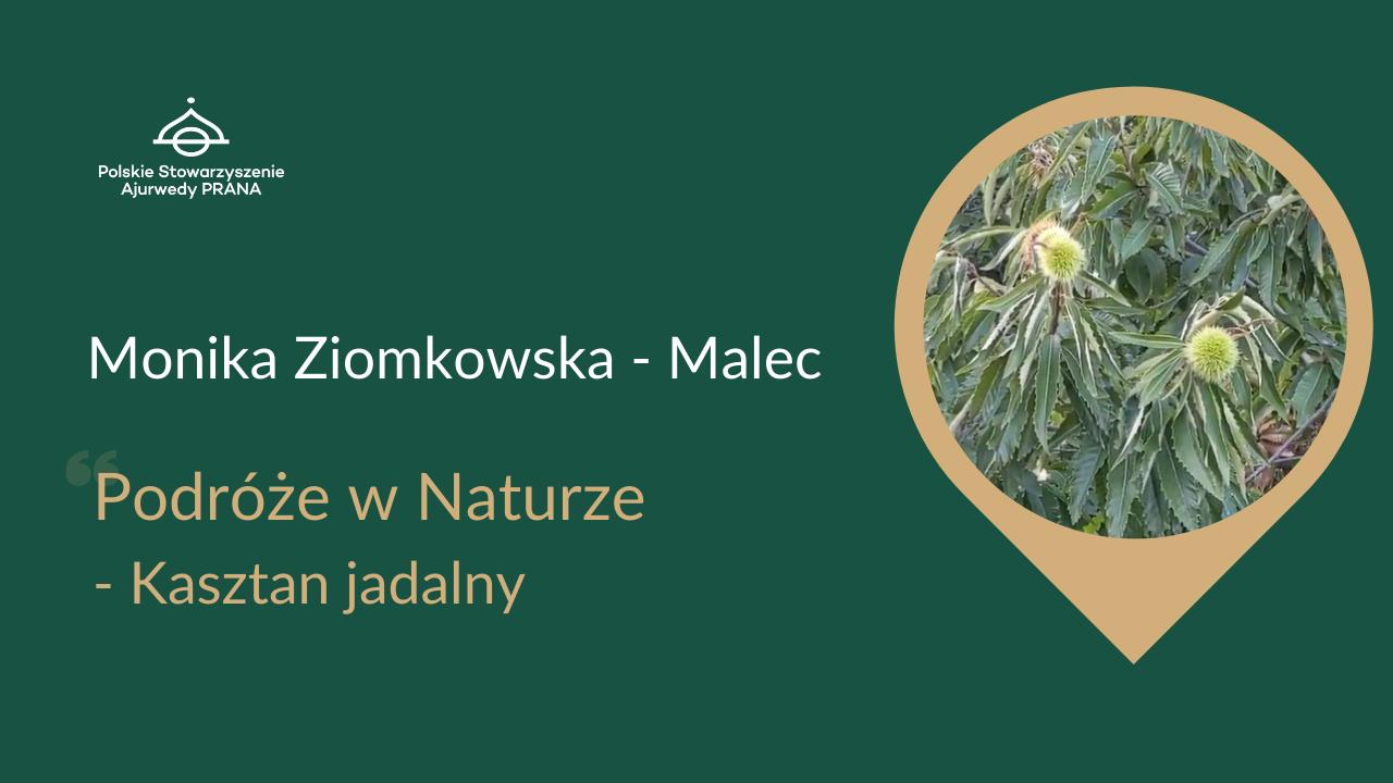 """Podróże w Naturze """"Kasztan Jadalny"""" – Monika Ziomkowska – Malec"""